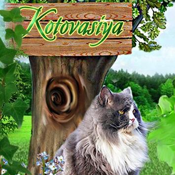 Котоваисия